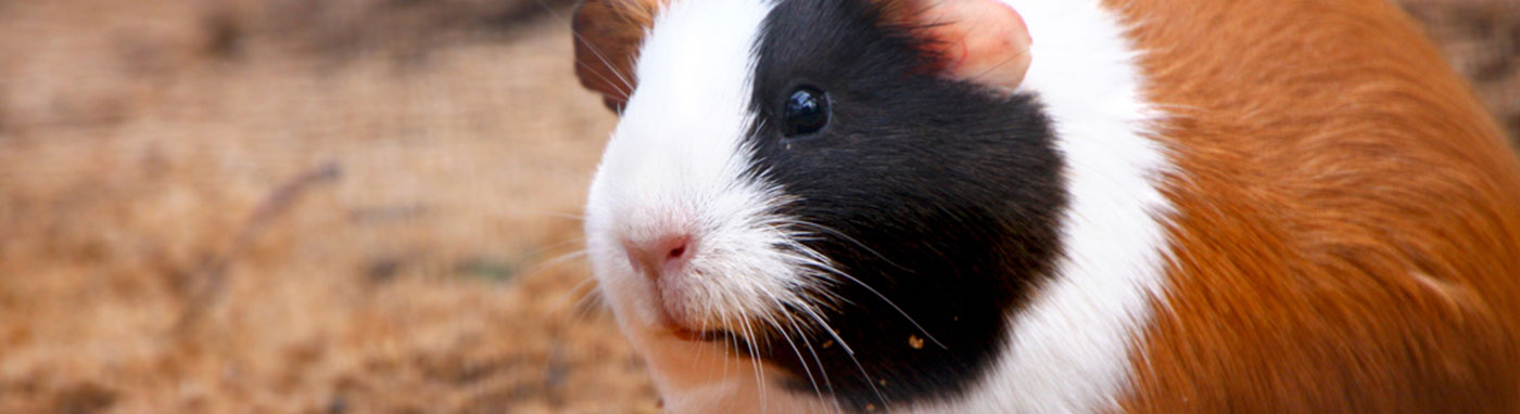 buy small animals in Bradenton, FL
