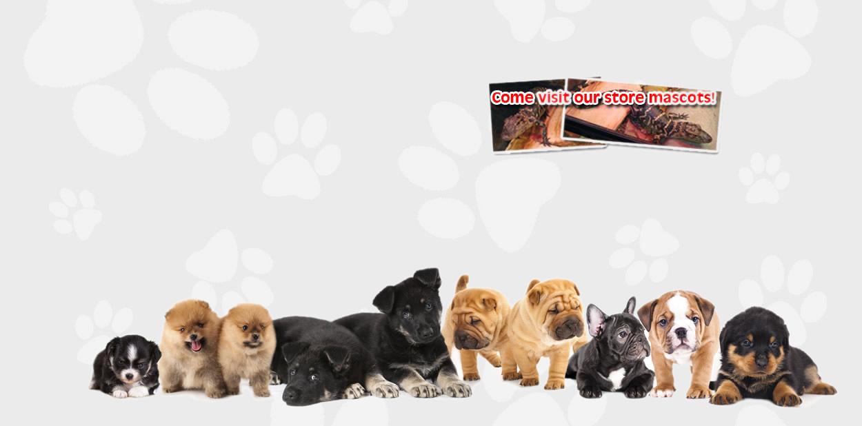 buy dogs in deerfield beach, FL