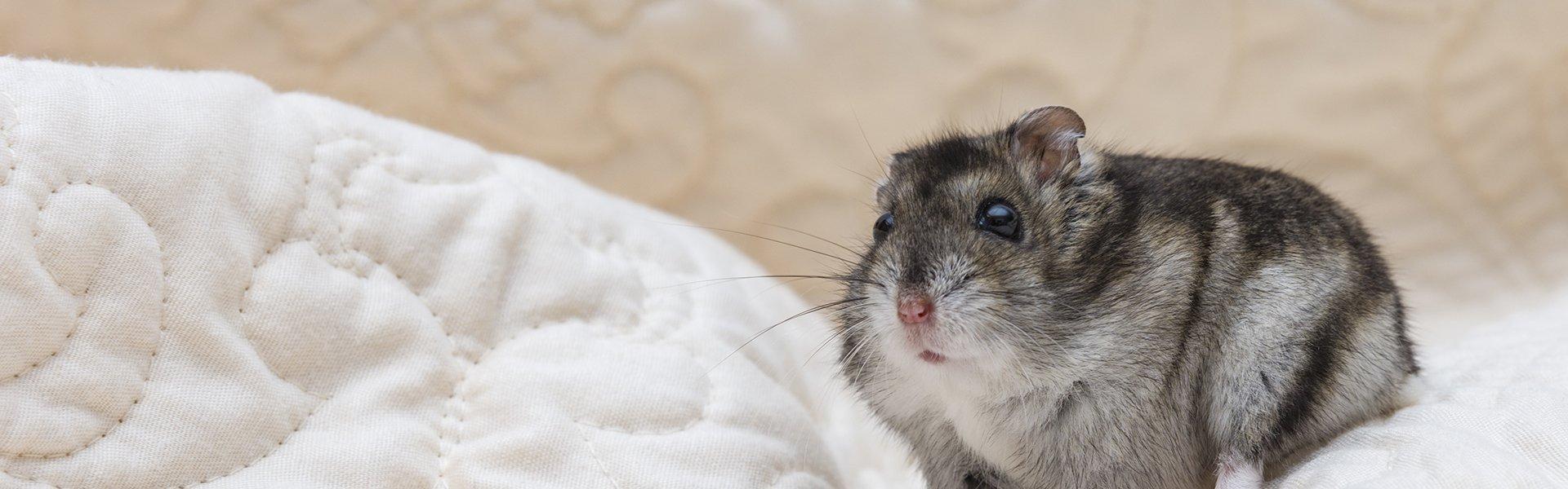 Small Animals for Sale – Petland Bradenton Florida Pet Store